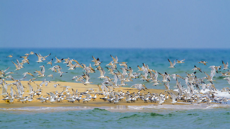 Flock of seagulls by sea against sky