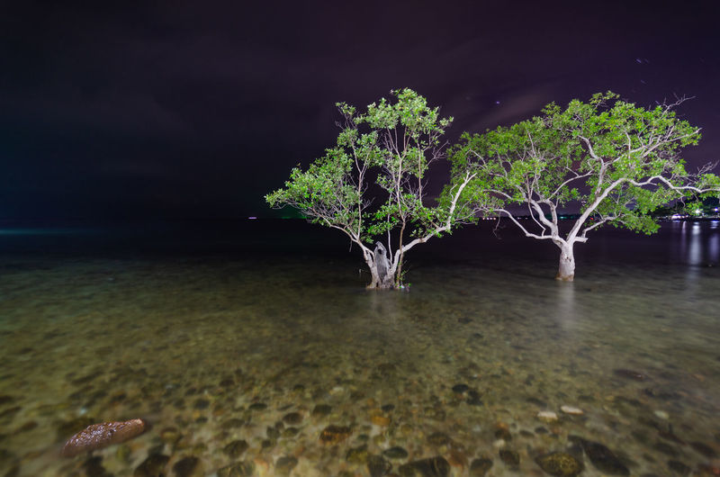 Tree by sea against sky at night