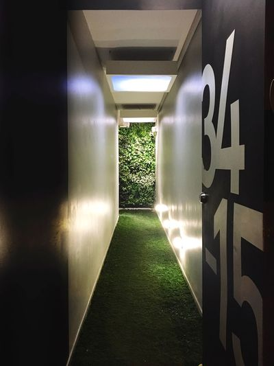 Indoors  Grass