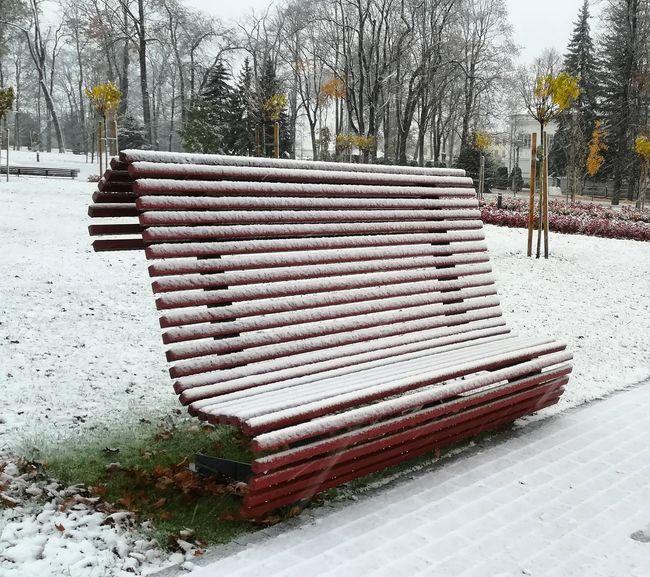 Autumn snow Tree Snow Winter Cold Temperature Sky Park Bench Bench Empty Wooden Park