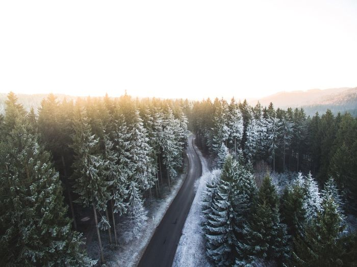Drone  Areal Nature Sunlight Tree Landscape Clear Sky