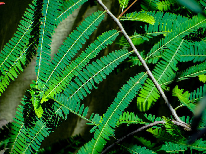 NATURAL PATTERNS Branches Of Trees Nature Rich Green Tones Lush Foliage Greenery Scenery Lush - Description Freshness Greenery Tree Leaf Plant Part Branch Close-up Plant Green Color Leaf Vein Palm Leaf Natural Pattern Full Frame Detail Textured  Leaves