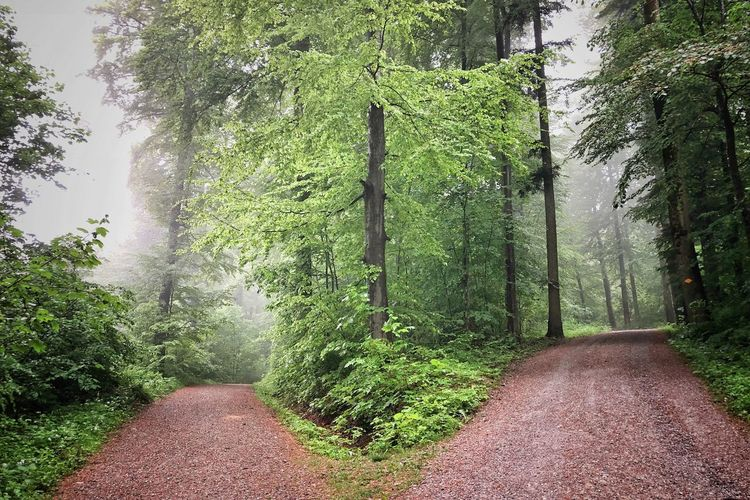 Photographer Photography Photooftheday Rainforest Picoftheday Naturephotography Plant Tree Growth The Way Forward Green Color Direction Nature Day Beauty In Nature No People Tranquility Footpath Outdoors Tranquil Scene Land Sunlight Forest Diminishing Perspective Scenics - Nature Road
