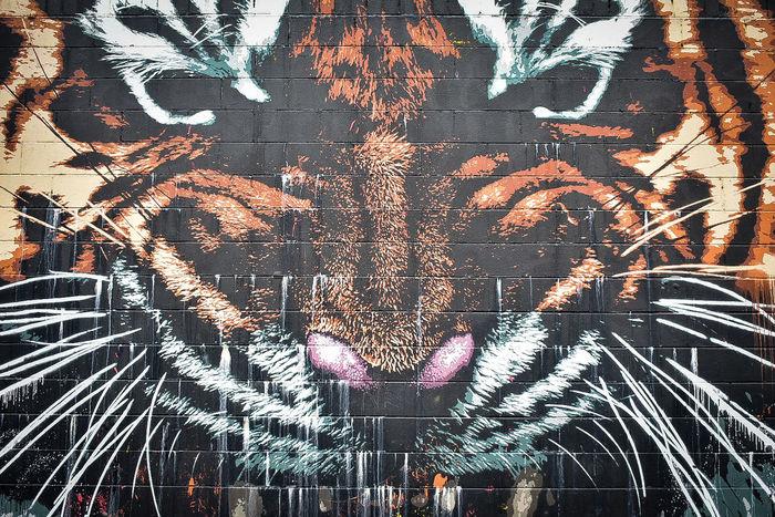 🐯 EyeEm Nature Lover EyeEm Selects EyeEm Gallery Eyeemphotography EyeEm Best Shots Eyeem Weekly Street Art Graffiti Art And Craft Modern Art Double Exposure Art Painted Image Spray Paint Mural