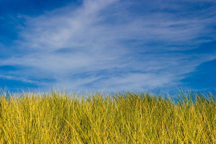 Sunny Green Field Summer Meadow Sand Dune Coast Green Grass Blue Sky Warm Sunny Green Grass And Sky Plant Agriculture Cloud - Sky Environment Beauty In Nature Outdoors Backgrounds No People Springtime Summer Blue Green Color Grass Nature Landscape Sky Wind Field Growth Crop  Rural Scene
