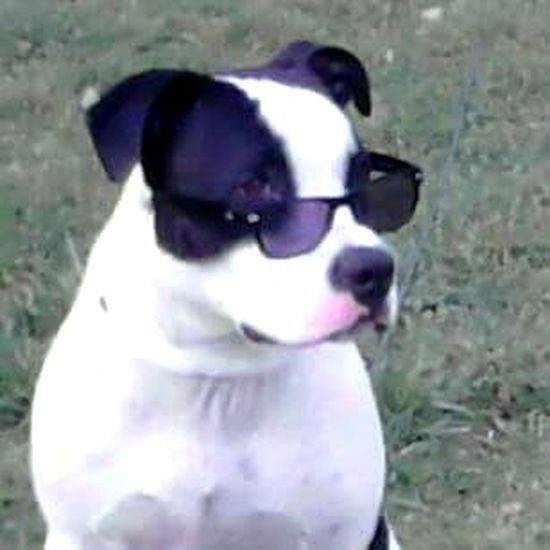 Dog Pets Animal Themes No People Outdoors Bulldog Bestfriend! Nofilternoedit Animalposing Check This Out Hipsteranimals