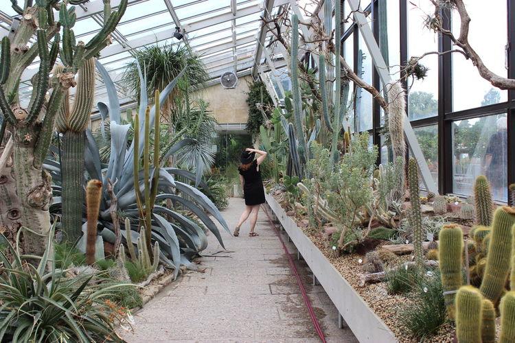 Rear view of woman walking in greenhouse