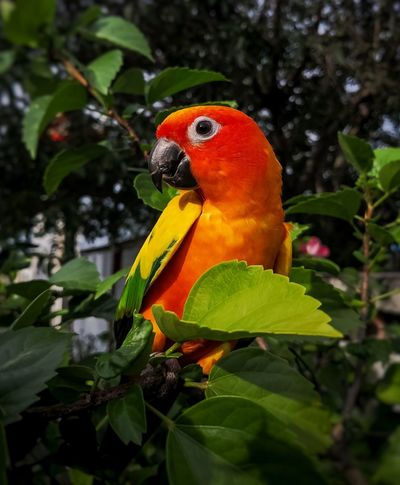 Bird Birds Of EyeEm  Bird Photography Animal Animal Themes Animals In The Wild Nature Nature_collection Nature Photography Naturelovers In My Garden Garden Photography Garden Hose Lovely Bird Close-up Tree Leaf Bird Red Close-up Parrot Macaw Cockatoo Gold And Blue Macaw
