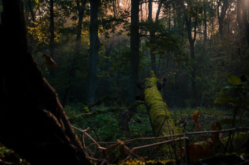 Nature Forest Magical Light Autumn First Eyeem Photo