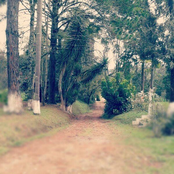 #sitio #caminho #paisagem #estrada #terra #arvore #pinheiro #tranquilidade #estrada Arvore Terra  Estrada Caminho Tranquilidade Paisagem Pinheiro Sitio
