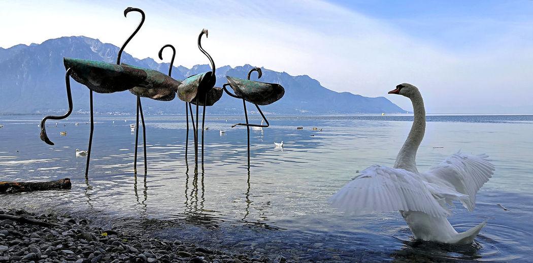 View of swan in sea against sky