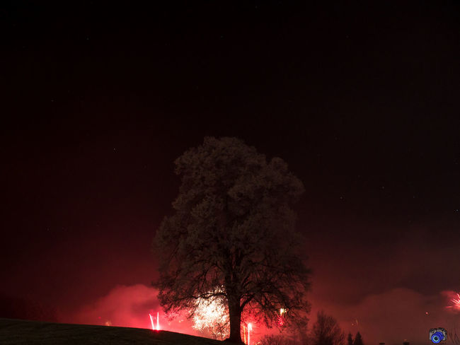 Feuerwerk A New Beginning Tree Forest Fire Illuminated Accidents And Disasters Sky Firework - Man Made Object Sparks Exploding Firework