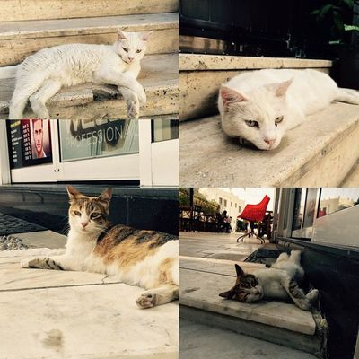 Bodrum ve kedileri :))