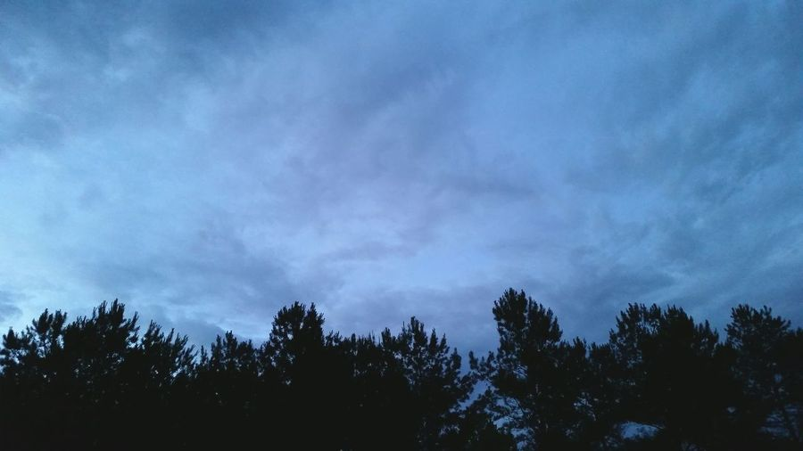 ◇ Blue Evening ◇ Cloudy Day Trees After Sunset Alabama Outdoors Blue Sky No People Rural America Tree Silhouette Blue Nature Photography Mobile Photography OpenEdit Tree Forest Pine Tree Sky Tree Area Storm Cloud Dramatic Sky Silhouette Overcast Atmospheric Mood