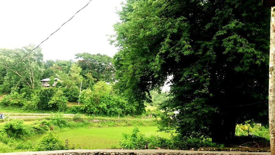 Tree Outdoors Growth Day Nature Green Color No People Water Grass Spraying Sky Beauty In Nature