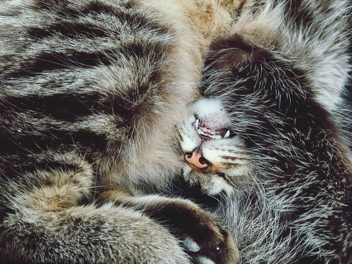Curious scene of a cat curled up in sleep
