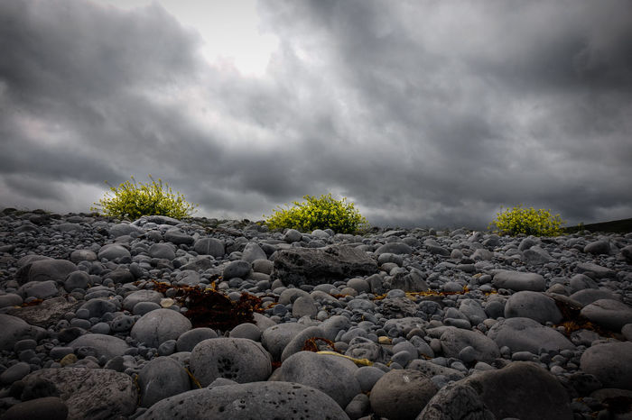 Pebbles Pebbles And Stones Shrubs Flowering Bushes Nature Cloud - Sky Landscape Landscape_Collection Yellow Flowers Tranquility Sky Eye4photography  EyeEm Best Shots Getting Inspired EyeEm Nature Lover Ireland🍀 Beautiful View Ireland Beauty In Nature Amazing View Nature Stormy Weather Clouds