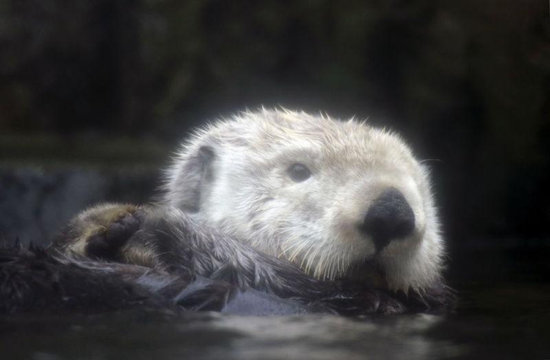 Close-up of an animal head
