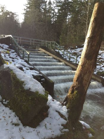 Salmon ladder CIRCLE Of LIFE Fish Ladder Fisheries Fishfarm Life Cycle Salmon Spawning Upstream Wildlife