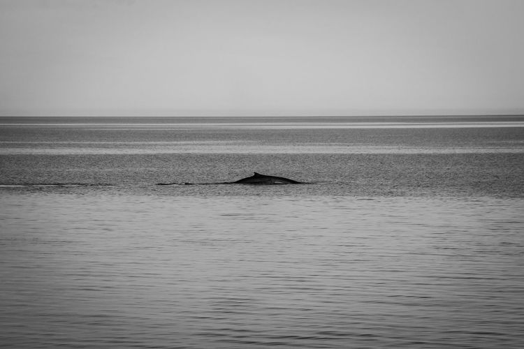 Ways Of Seeing Nature Whale Animal Marine Life Outdoors Sea Tranquility Water Wildlife #FREIHEITBERLIN