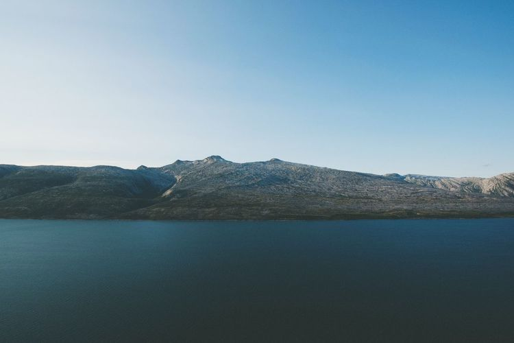 Fjordland Whale