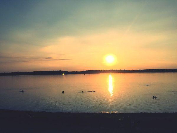 Sunset Water Sky Sunset Scenics - Nature Beauty In Nature Tranquility Tranquil Scene Non-urban Scene Bird No People Idyllic Animal Cloud - Sky Silhouette Orange Color Sunlight Reflection Sun Sea Nature