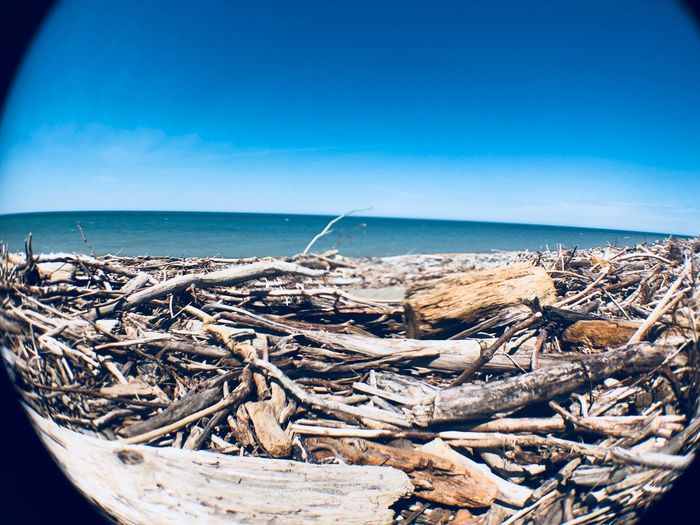 Drift wood EyeEm Selects Sea Sky Water Blue Horizon Horizon Over Water Scenics - Nature Nature Day Beach Beauty In Nature Land Tranquil Scene Tranquility No People Clear Sky Outdoors Copy Space Sunlight Idyllic