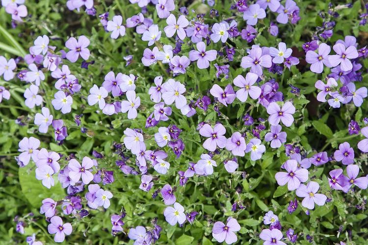 High angle view of purple flowers blooming in park