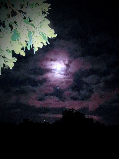 """""""Once in a blue Moon"""" EyeEm Best Shots - Nature Country Mornings Texas Landscape EyeEm Best Shots EyeEmNewHere Blue Moon Sky Cloud - Sky Beauty In Nature Night Tranquil Scene Nature Low Angle View Tranquility Scenics - Nature No People Silhouette Tree Moon Outdoors Idyllic Pink Color Moonlight"""