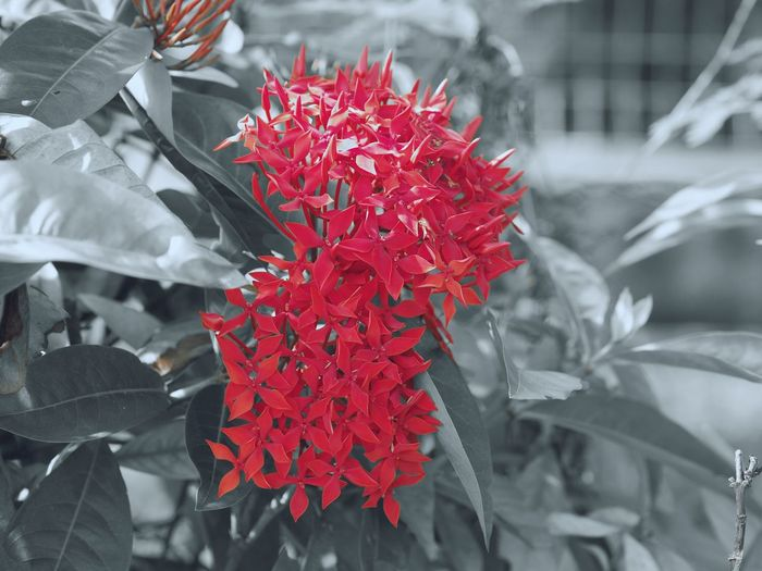 Red Nature Fragility Beauty In Nature Close-up Outdoors