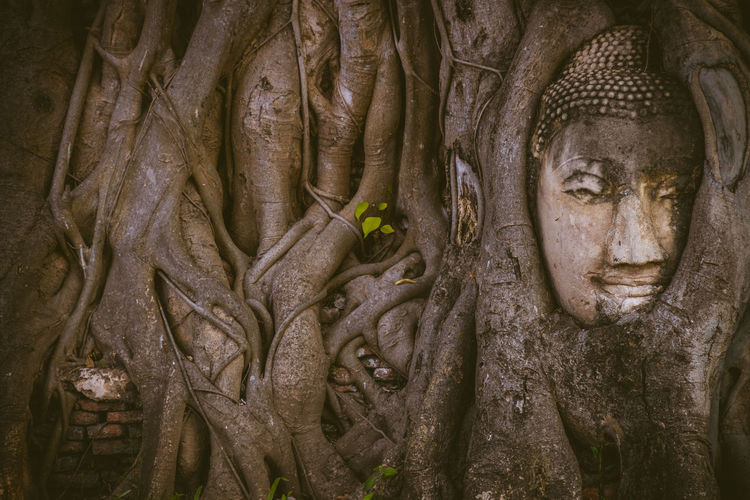 Close-up of buddha statue on tree