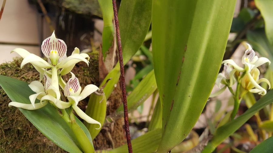 #orchid #nature