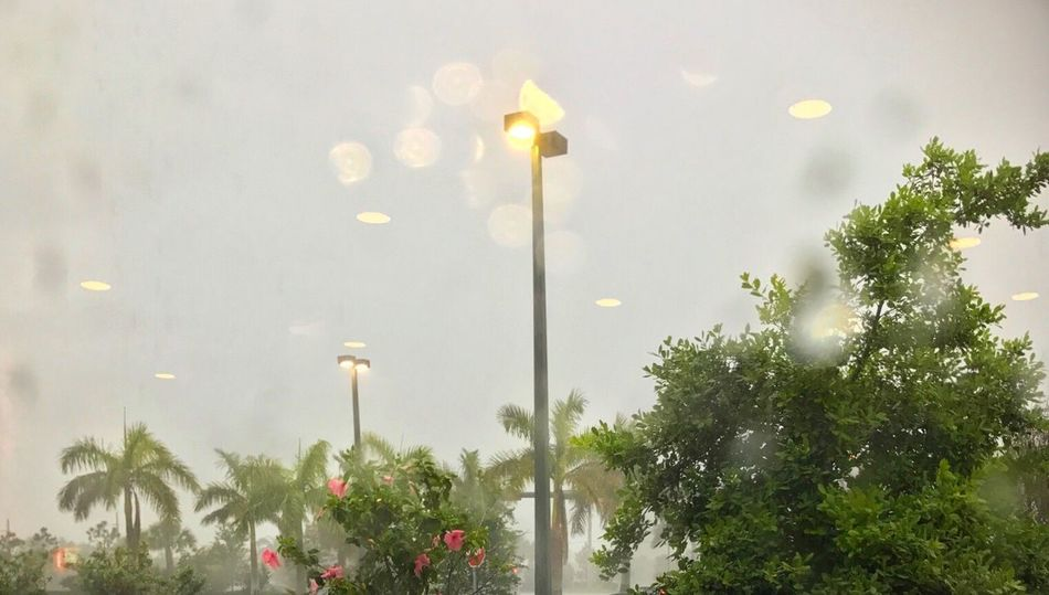 100dayproject 100dayprojectmimedia Tropical Storm Storm Florida Outdoors Neighborhood Map Nature