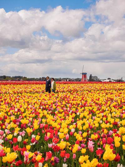 View of sunflower field
