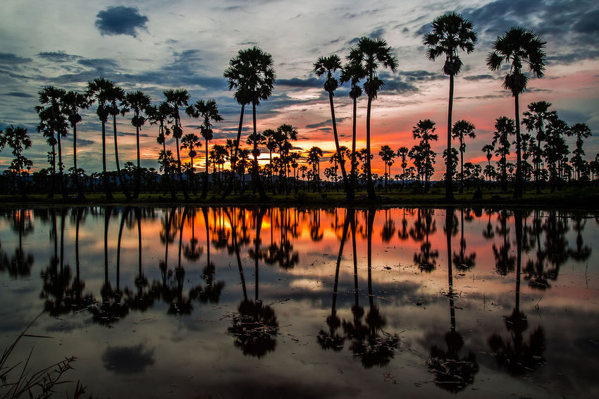 Tree Water Sunset Palm Tree Reflection Lake Sky Cloud - Sky Landscape Silhouette