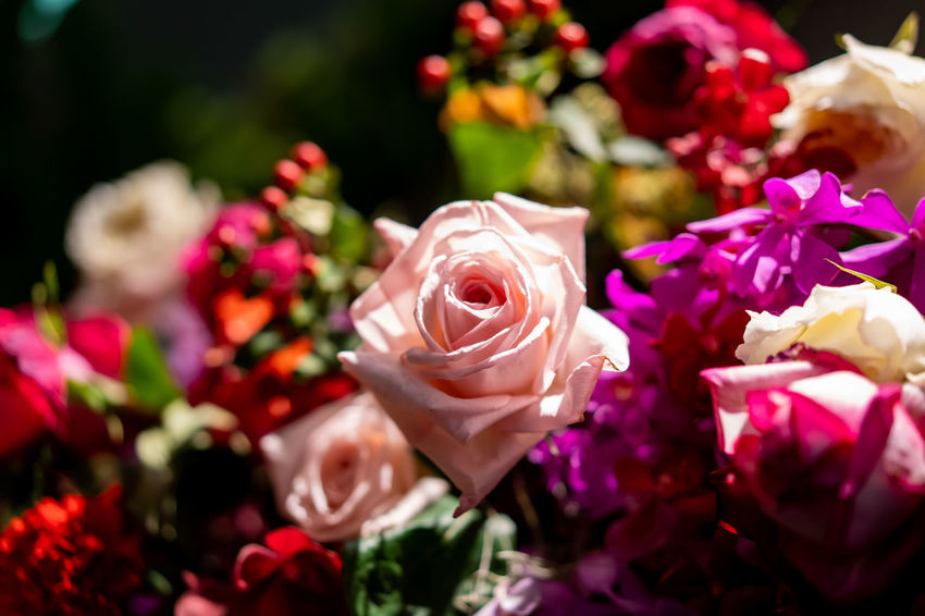 Flowers in the spring, colorful, natural, beautiful bouquet filled with many varieties of various kinds on the background of the beautiful garden full of color and scent. Flower Flowering Plant Plant Rosé Beauty In Nature Rose - Flower Freshness Petal Vulnerability  Pink Color Flower Head Close-up Fragility Nature Inflorescence No People Selective Focus Flower Arrangement Focus On Foreground Bouquet Outdoors Softness Bunch Of Flowers
