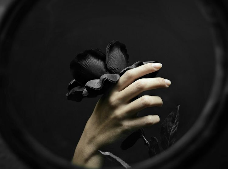There's no rose without thorns' Roses Hand Lights Manos Photography Check This Out Luz Y Sombra  Rosas Espinas Reflection