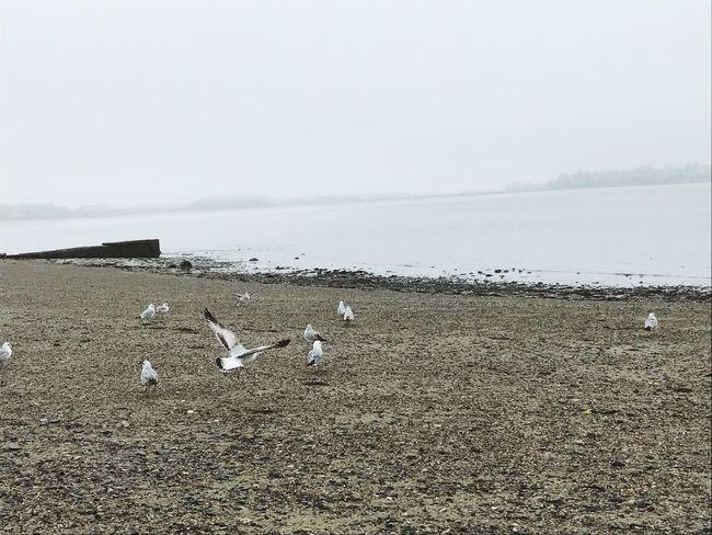 Seagulls Fog Beach Nature Sea Sand Gray