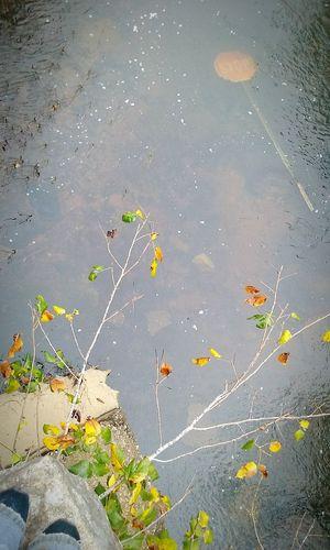 Water No People Close-up Day Lake Nature Outdoors Stop Signs Lol Bridge