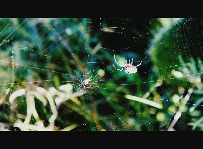 Magic Spiderweb