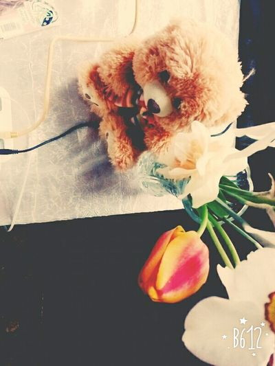 Flowers Sping Time 2016 Bear
