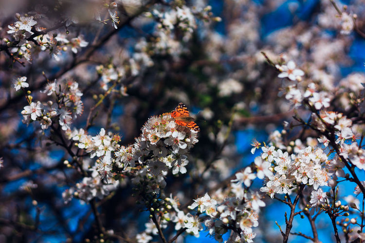 Butterfly pollinating on flowers