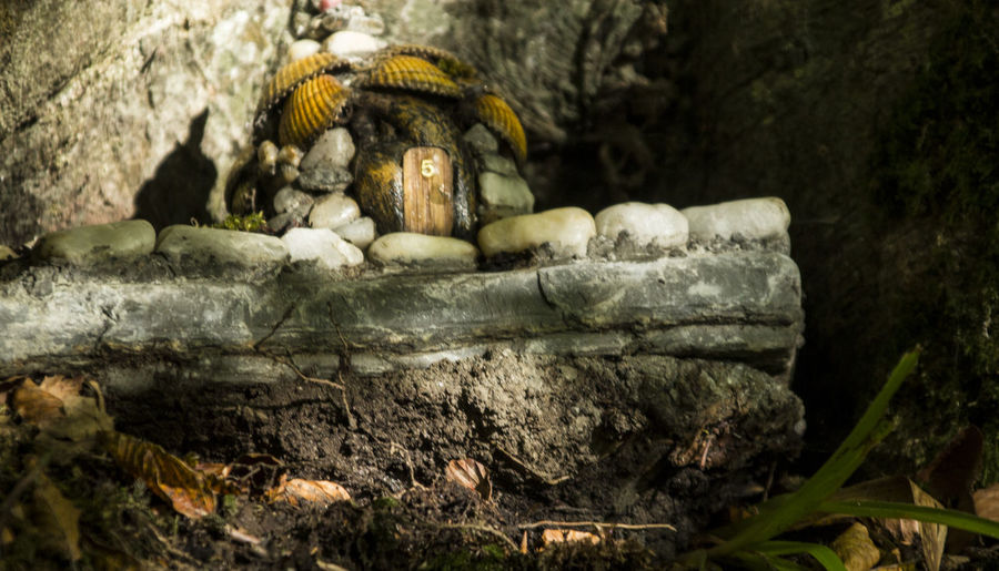 Little cute mushroom house in the middle of a forest Art And Craft Balance Brown Close-up Derry Detail Deterioration Focus On Foreground Food Food And Drink Full Frame Healthy Eating Ireland Large Group Of Objects Mushrooms Mystic House Pebble Religion Rough Selective Focus Still Life Stone Textured
