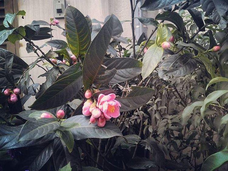 Hoa Flower Hanoi đẹp Beautiful Natural Fresh