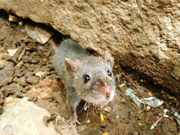 Searching for youFor You Cutie Mice Jerry Search Pose Rodent High Angle View No People Nature Close-up