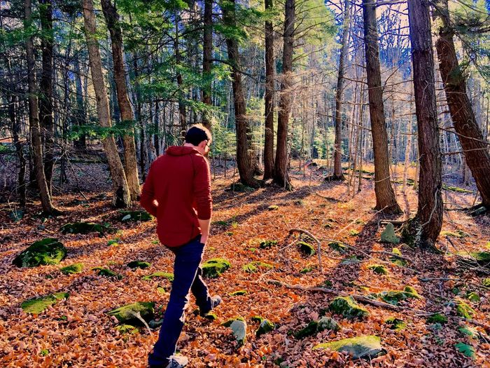 Walking Around Nature Autumn Tree Forest Real People One Person Fall Day Sunlight Outdoors