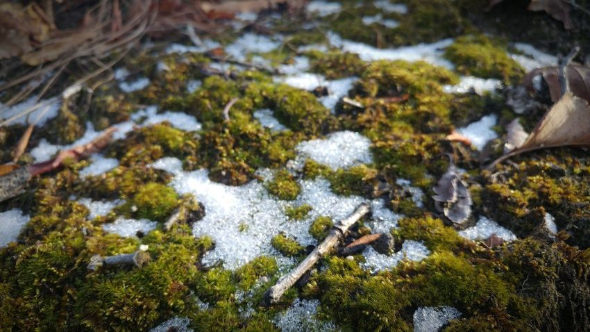 Snow Moss-covered Close Up Moss Covered Rocks RocksNatureNo People Day Outdoors Tranquility Growth Beauty In Nature Textured