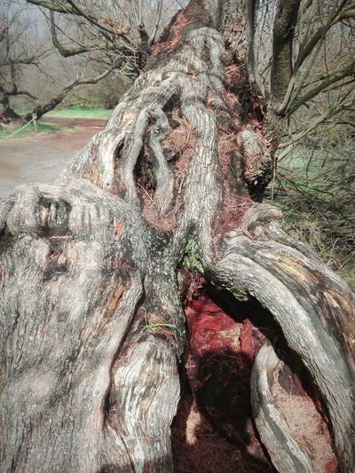 Naturaleza muerta Bosque De Tarayes. Tablas De Daimiel J.J.D.R. Day Paisaje Bosque Forest Full Frame Backgrounds Textured  Pattern Sunlight Close-up Woods Fallen Tree Tree Trunk Branch Moss