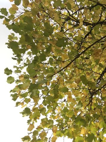 Nature Growth Vertical Tree Low Angle View Branch Fragility Leaf Close-up No People Beauty In Nature Flower Outdoors Day Freshness Leaves Autumn Season