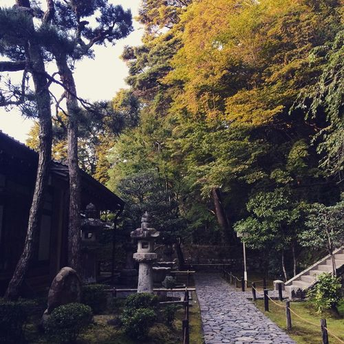 Kyoto | Japanese Garden Tree Growth Nature No People Tranquility Outdoors Day Architecture